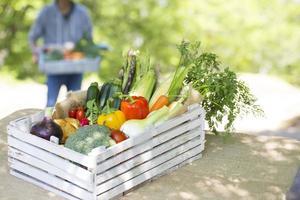 skörd av grönsaker foto