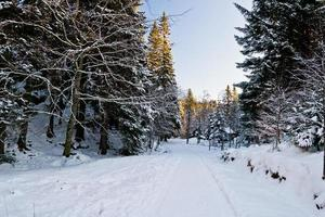 snöiga landskap ii foto