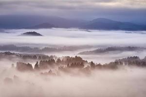 kuperat landskap med dimma