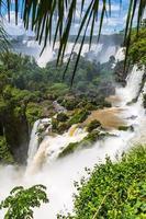 tropiska fall foto