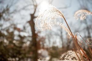 vinter sol foto