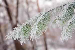 vinterstämning foto