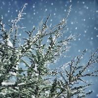 vacker vinterbakgrund foto