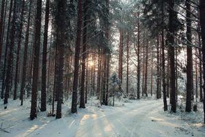 frostigt vinterlandskap i snöig skog foto