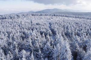vinter landsape foto