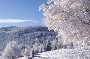 vintern i Polen foto