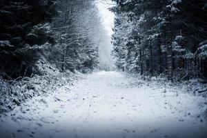 stig i vinterskogen foto