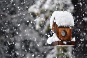 fågelhus på vintern foto