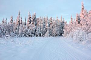 vinter snöig väg i skogen foto