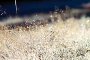 vild äng på vintermorgonen foto