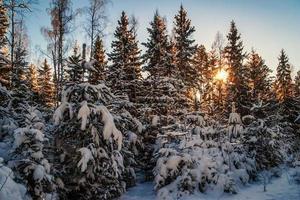 vacker vinter solnedgång foto