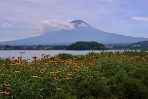 mt fuji och gaillardia blommor