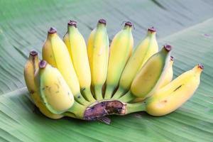 färska mogna bananer på bananbladbakgrund foto