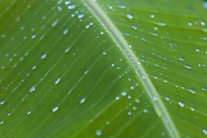 regndroppar på palmbladet