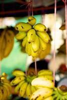 liten tropisk bananplantan foto