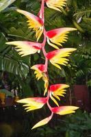 blomning av ett bananträd i en botanisk trädgård