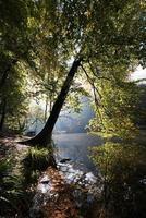 sjö i skogen foto