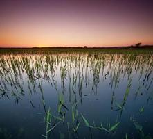 solnedgång vid sjön foto