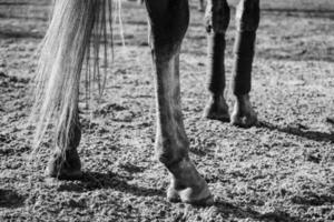 långa vackra ben foto
