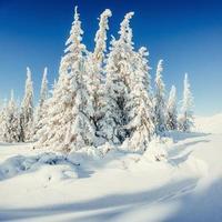 fantastiskt vinterlandskap och träd i rimfrost. i anticipatio