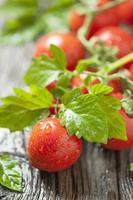 röda körsbärstomater foto