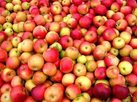 röda äpplen! foto