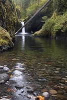 fallet träd i ett vattenfall foto