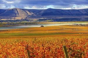 orange blad druvor falla vingårdar röda berget benton city washington