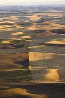 utsikt över lapptäcke av gårdar i höst, Palouse dal, östra foto