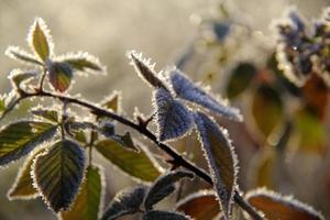 frost foto