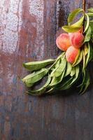 persikor på gren foto