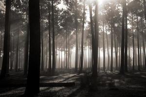 hög trädskog foto
