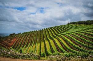 vingård i udde stad på en molnig dag foto