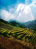risfält på terrasserad av mu cang chai, yenbai, Vietnam.