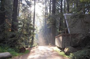 stuga i kalifornisk skog foto