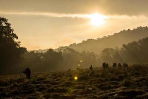 bevittna gryningen - monter mahameru campingplats foto