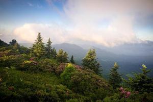 roan mountain rododron blommar 10 foto