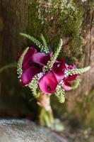 röda calla liljor foto