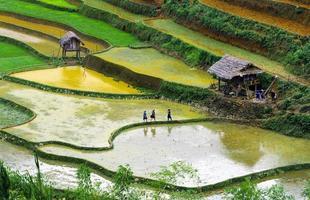 terrasserade risfält foto