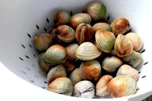 Nya Zeeland mussla foto