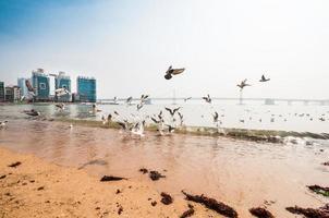 gwangalli stranden och bron foto