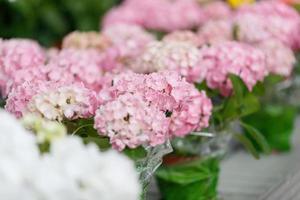blommor i ett växthus foto
