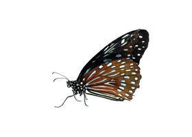 fjäril isolerad på vitt foto