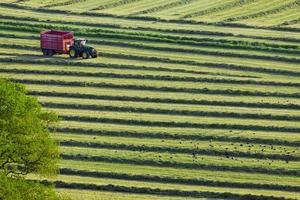 traktor och släp som klipper ensilage i fält foto