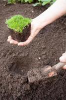 äldre kvinnlig plantering plantor foto