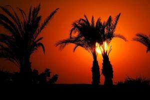 solnedgång i Egypten foto