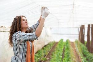 kvinnlig arbetare på växthusplantage foto