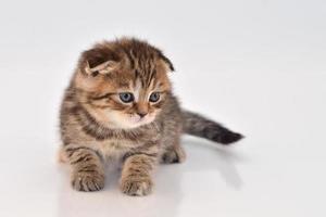rolig liten kattunge foto