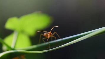 myra på ett blad foto