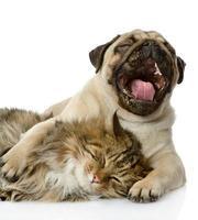 hunden och katten ligger tillsammans foto
